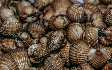 Clams (Health protection)