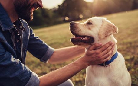 Dog - stock image